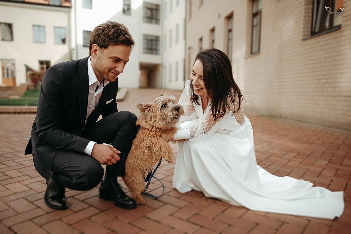 šuo vestuvese